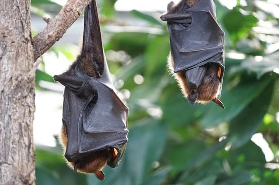 Bats save us billions
