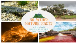 50 Weird Nature Facts that will que...
