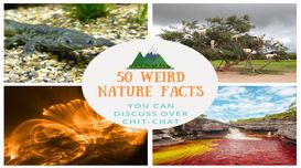 50 Weird Nature Facts that question...