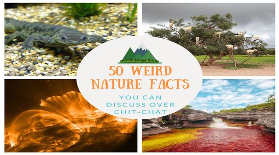 Weird-Nature-Facts