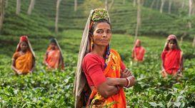 Assam- a land of natural beauty