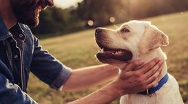 HEALTHY HABITS TO KEEP YOUR PET HAP...