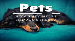 How pets help in reducing stress in...