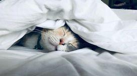 Poor Sleeping: Here's How It Is Cau...
