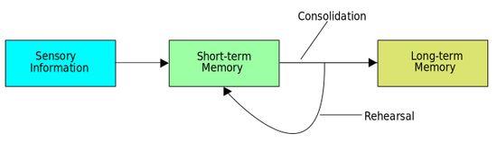 Reading improves memory