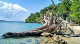 Top Restaurants for Your Andaman Ho...