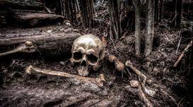 Tree's revenge: A short suspense st...
